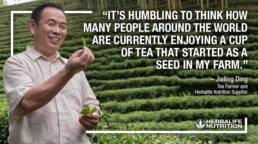 Jialing Ding Tea Farmer